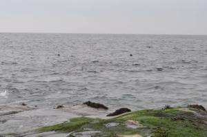 If you look closely, the two dark spots in the water are seals bobbing in the ocean.  A sight that became all too familiar for the castaways.