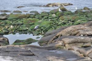 The island had an abundance of seaweed that covered the rocks. The seaweed served as a source of sustenance for the men and as a hazard as they walked the island.
